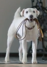 hondje_vw_commercial